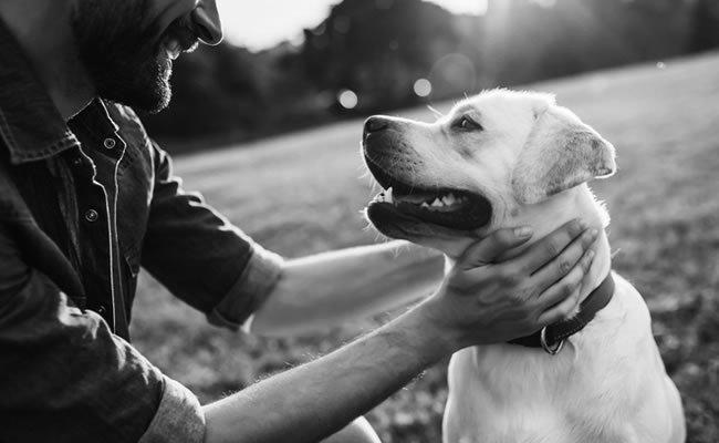 srecan pas i vlasnik